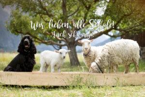 Wir von Villgrater Natur lieben alle Schafe! Auch schwarze.
